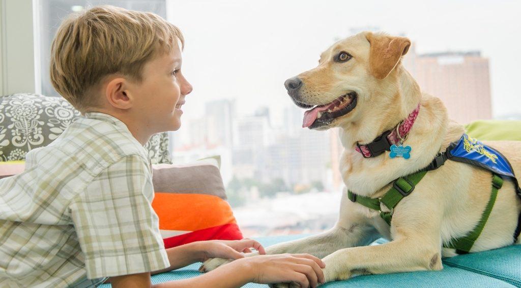 пет-терапия с собакой
